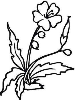 Hibiscus-flower-coloring-pages-2