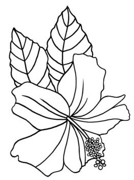 Hibiscus-flower-coloring-pages-3