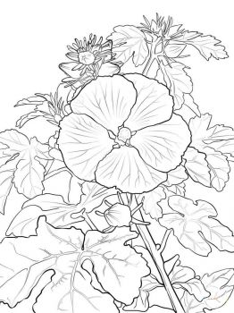 Hibiscus-flower-coloring-pages-9
