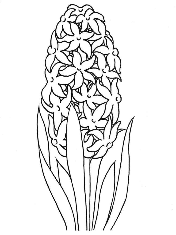 ausmalbilder hyazinthe  malvorlagen kostenlos zum ausdrucken