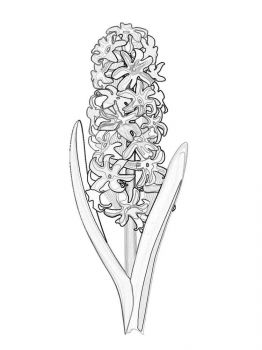Hyacinth-flower-coloring-pages-2
