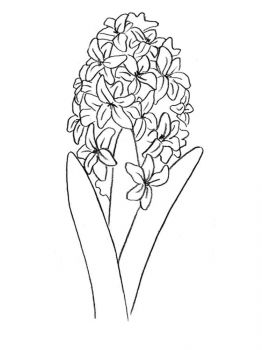 Hyacinth-flower-coloring-pages-4