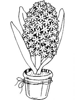 Hyacinth-flower-coloring-pages-6