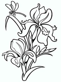Iris-flower-coloring-pages-2
