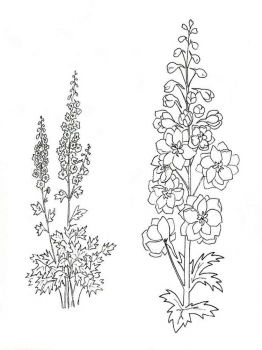 Larkspur-flower-coloring-pages-1