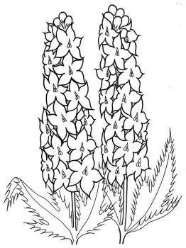 Larkspur-flower-coloring-pages-2
