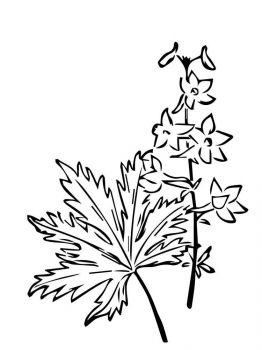 Larkspur-flower-coloring-pages-5