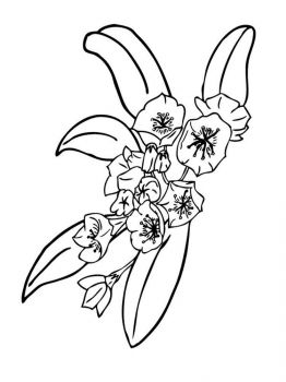 Laurel-flower-coloring-pages-1
