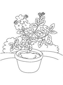 Laurel-flower-coloring-pages-6