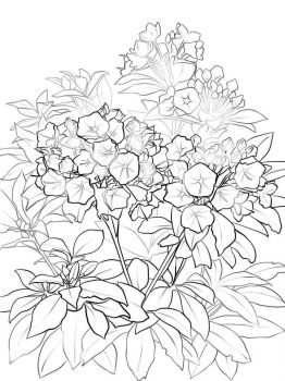 Laurel-flower-coloring-pages-8