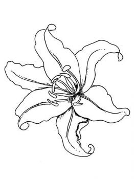 Lilies-flower-coloring-pages-11