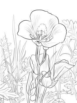 Lilies-flower-coloring-pages-12