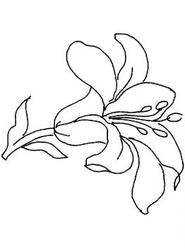 Lilies-flower-coloring-pages-15