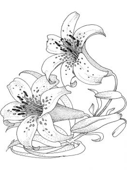 Lilies-flower-coloring-pages-16