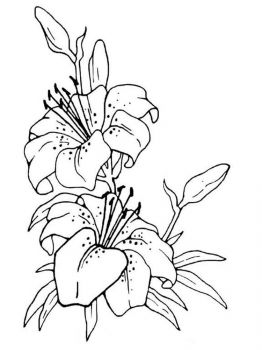 Lilies-flower-coloring-pages-2