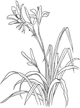 Lilies-flower-coloring-pages-9