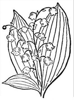 Lily-of-the-valley-flower-coloring-pages-5
