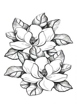 Magnolia-flower-coloring-pages-10