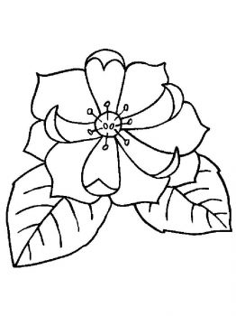 Magnolia-flower-coloring-pages-11