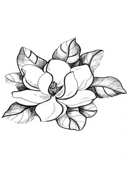 Magnolia-flower-coloring-pages-9