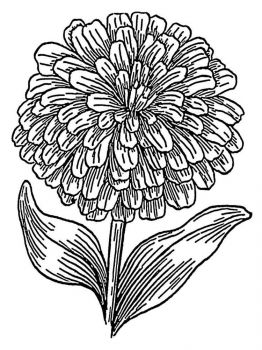 Marigolds-flower-coloring-pages-1