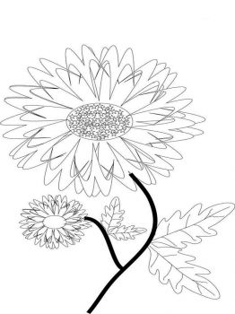 Marigolds-flower-coloring-pages-2
