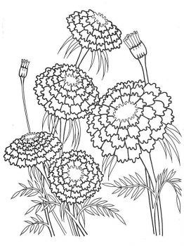 Marigolds-flower-coloring-pages-3