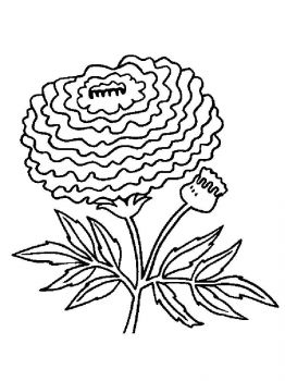 Marigolds-flower-coloring-pages-8