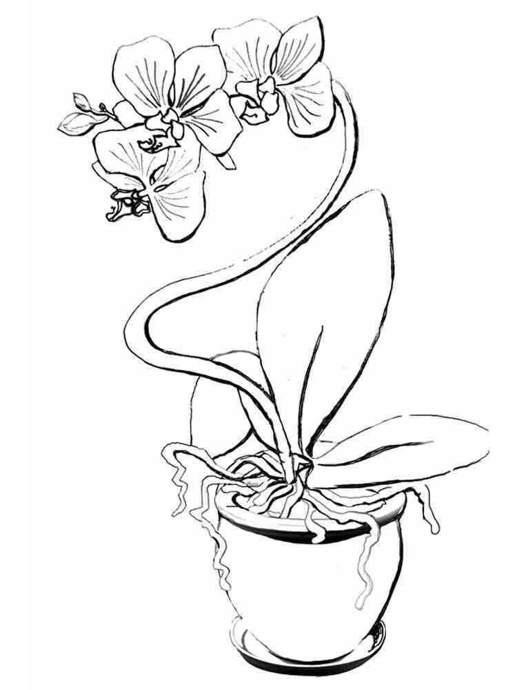 ausmalbilder orchidee  malvorlagen kostenlos zum ausdrucken