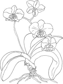 Orchid-flower-coloring-pages-14