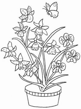 Orchid-flower-coloring-pages-15