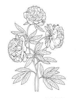 Peony-flower-coloring-pages-11