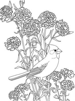 Peony-flower-coloring-pages-13