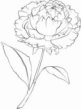 Peony-flower-coloring-pages-2