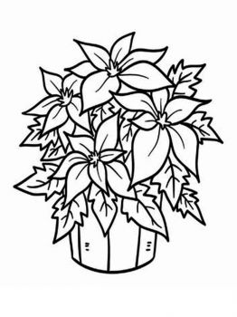 Poinsettia-flower-coloring-pages-4