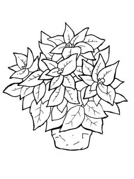 Poinsettia-flower-coloring-pages-7