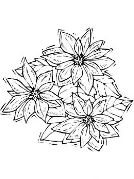Poinsettia-flower-coloring-pages-9