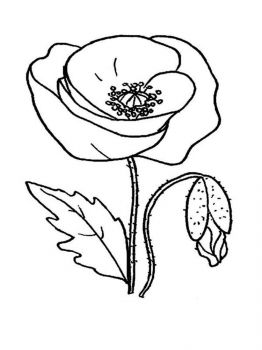 Poppy-flower-coloring-pages-13