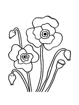 Poppy-flower-coloring-pages-6