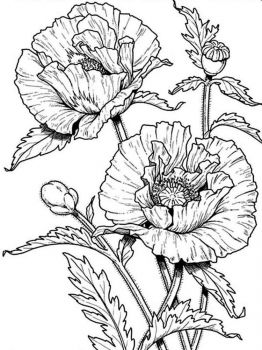Poppy-flower-coloring-pages-8