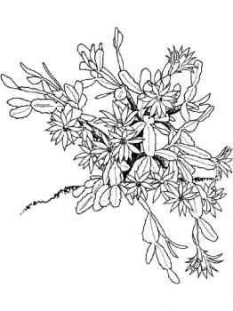 Schlumbergera-flower-coloring-pages-3