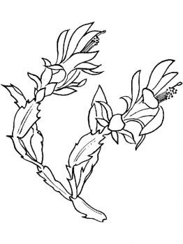 Schlumbergera-flower-coloring-pages-4
