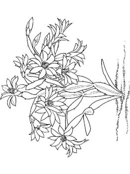 Schlumbergera-flower-coloring-pages-5