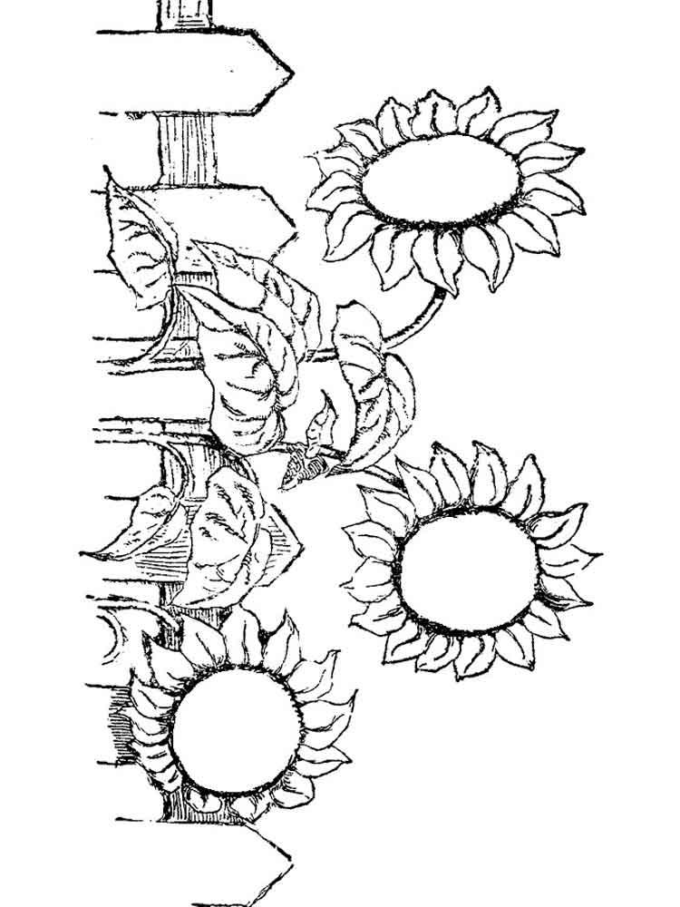 ausmalbilder sonnenblume  malvorlagen kostenlos zum