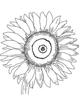 Sunflower-flower-coloring-pages-10