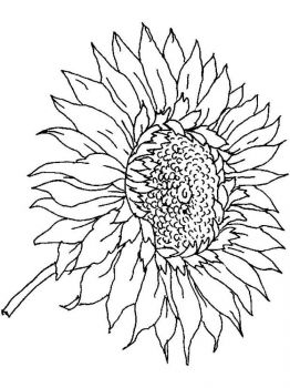 Sunflower-flower-coloring-pages-2