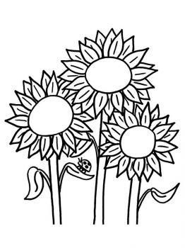 Sunflower-flower-coloring-pages-3