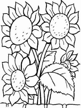 Sunflower-flower-coloring-pages-5