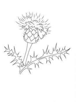 Thistle-flower-coloring-pages-4