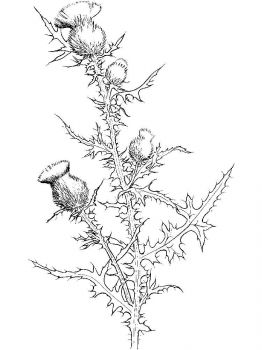 Thistle-flower-coloring-pages-9